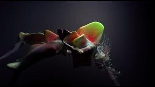 Björk - tabula rasa
