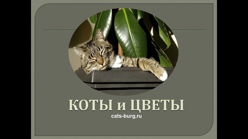 Кот домашний флорист Cat home florist