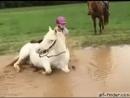 Когда молодой руководитель подвел лошадь к реке...