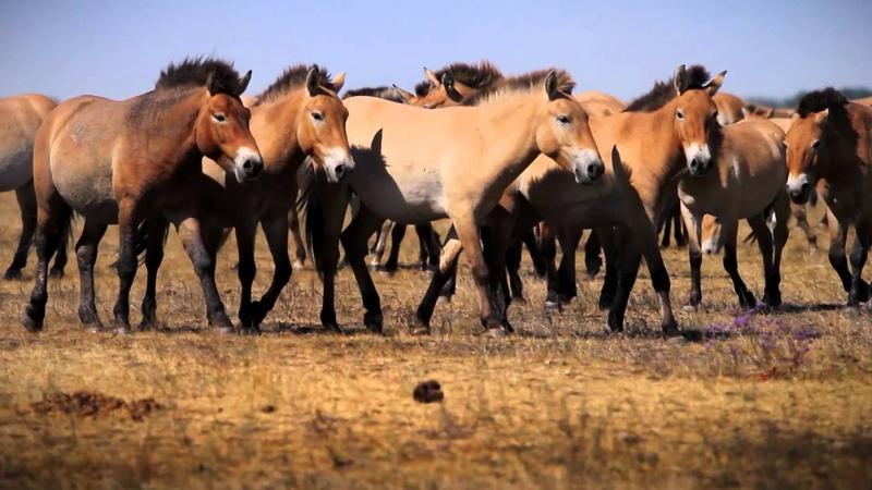 Noé bárkáján - a 40 éves Hortobágyi Nemzeti Park
