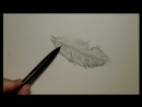 Drawing and Sketching for Beginners 006 Demonstration - Sketching A Feather