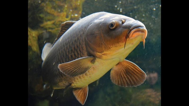 Самая крутая рыбалка Кастинговой сетью!Лучшие моменты одного дня