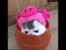 Милые создания котики