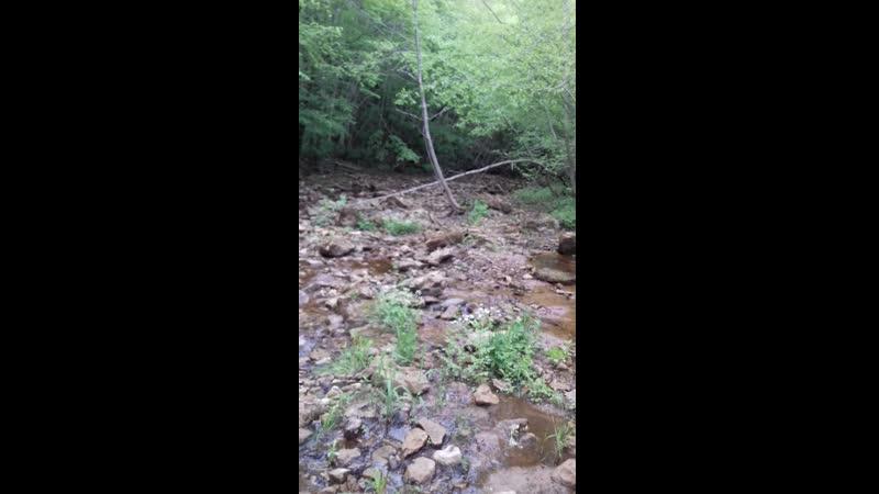вода выходит из земли и образует быстротечную реку