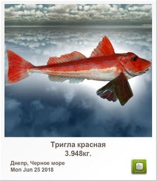 podobral-golosuyushuyu-na-shosse-i-trahnul-trah-rakom-devushki