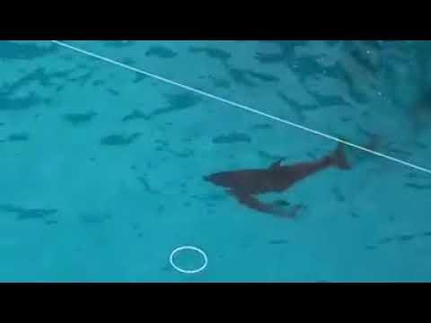 В одесском дельфинарии во время представления родился дельфиненок