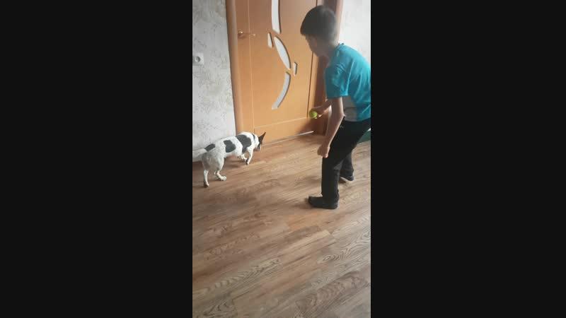 Собаки это заряд энергии и позитива dogsy догситтеры нянядлясобак