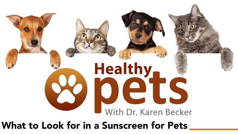 Зачем животным солнцезащитные средства / What to Look for in a Sunscreen for Pets