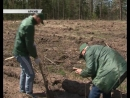 В Курской области сокращается количество черных лесорубов