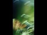 Дмитрий Нестеров - Live