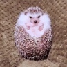 DAILY VIDEOS 🇺🇸 on Instagram So cute ❤️ Yes or no Credit @hedgehog azuki Leave tour comment 🗨️ Tag tour comment 👫 Follow 👣@incredibletricks