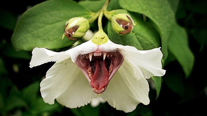 5 САМЫХ ОПАСНЫХ РАСТЕНИЙ УБИЙЦ Растения Хищники