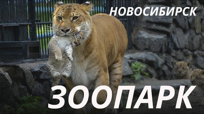 Зоопарк в Новосибирске - Novosibirsk ZOO - Куда пойти vlog