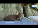 «Думали, что домашний»- В Приморье спасли краснокнижного лесного кота_HIGH.mp4