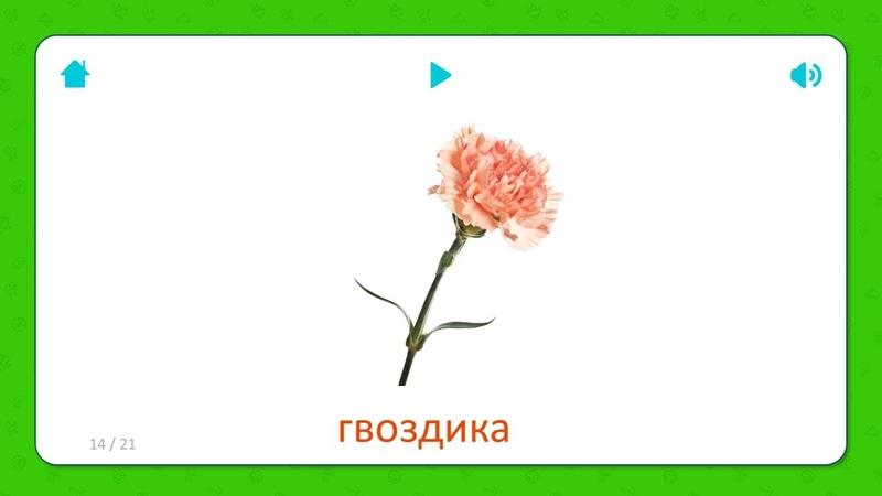 Гвоздика - Карточки для детей - Цветы - Карточки Домана