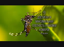 mosquito-compaction-test_hd