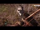Far Cry Primal Квесты странствия и охота