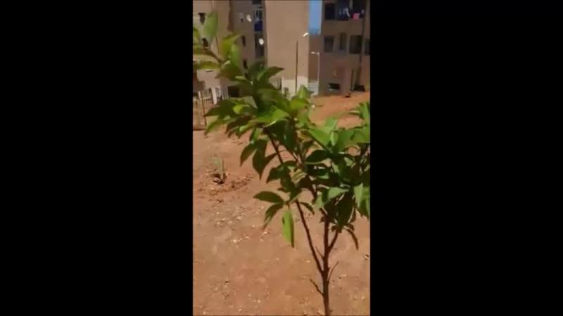Environnement Un geste un arbre une vie l'amour au quotidien Hommage et respect à cet amoureux de la vie