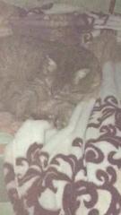 Кошка лижет одеяло)