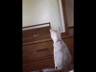 Ого, это что, мои ушки