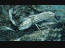 Нелюбовь и голуби репортаж о разрушенной голубятне в Выборгском районе
