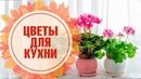 Комнатные растения 🌺 Какие растения посадить на кухне? 🌺 Выбираем вместе с экспертом hitsadTV
