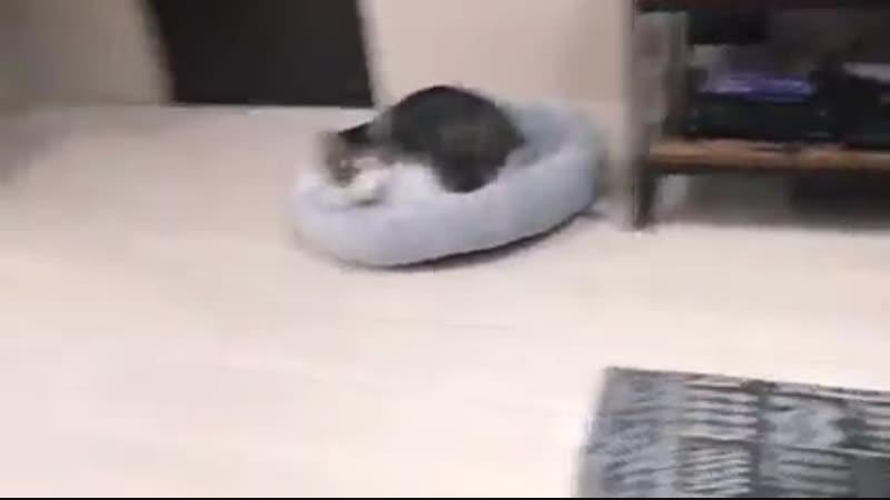 Кот, исполняющий грузинские застольные песни