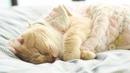 Года идут, но мое чувство зависти к коту, который остается дома…
