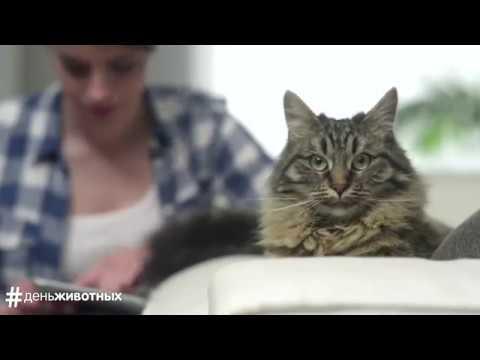 Whiskas и Pedigree День животных. Праздник для собак и кошек (2016)