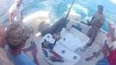 Нерп прыгает на катере чтобы насладиться рыбой
