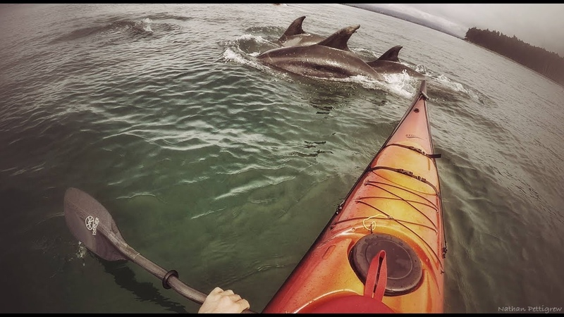 Bottlenose dolphins New Zealand