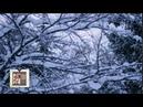 Shostakovich : Symphony No.8 in C minor, op.65 / Mravinsky 1982