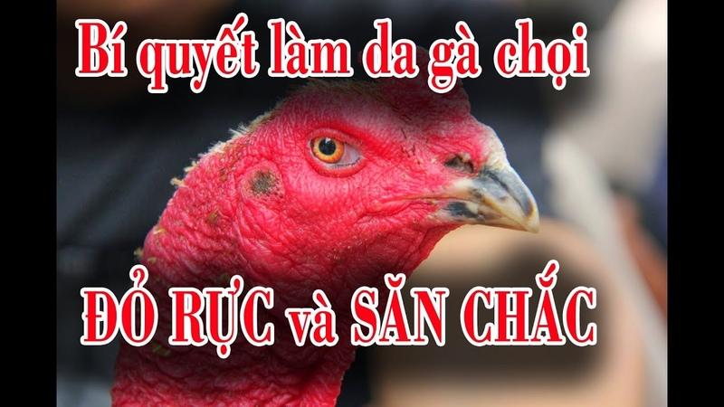 Gà chọi: Hướng dẫn làm da gà chọi đỏ rực, nguyên liệu om gà chọi da dày và săn chắc
