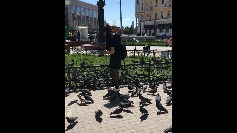 Наглые голуби 😅