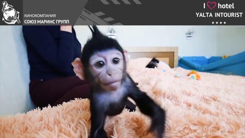 Что гости Отеля Yalta Intourist думают о зоопарке Отеля «Планета обезьян и диких кошек»