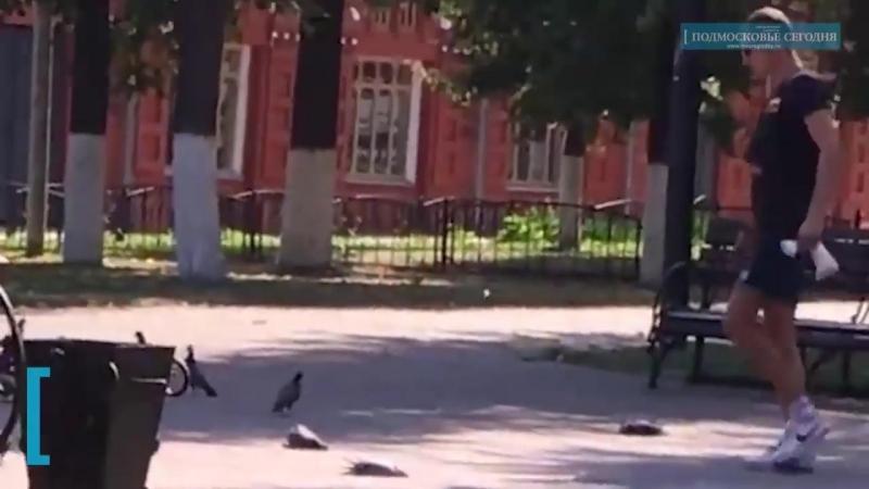 Хулиган забил до смерти голубей в Клину