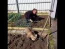 Иностранцы думают, что русские медведи ходят по улицам и играют на балалайках ... А на самом деле им некогда ... Они заняты по