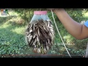Amazing Fish Trap - Wow! Fish Catch With Plastic Bottle street food