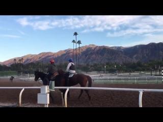 Favourite Santa Anita and big horse.