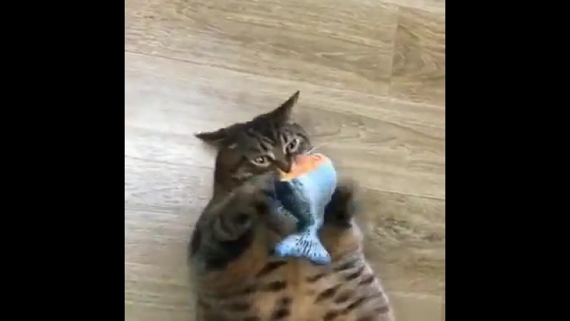 Хищник со своей добычей