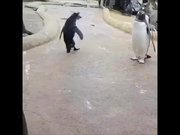 Пингвин весельчак!))