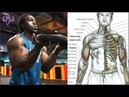10 Ejercicios para Trabajar Biceps y Espalda, 10 Exercises to Work Biceps and Back