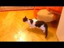Кот Муфаса машет лапкой из дома видео из дома