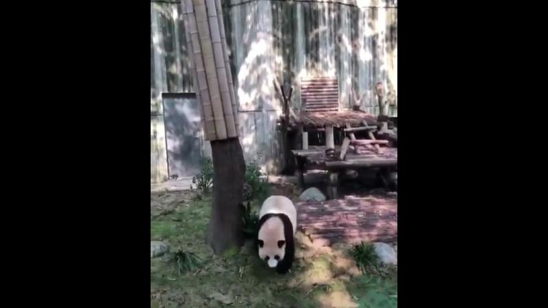 Кунг фу панда panda face часть 2 765 X 612 mp4