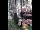 Кунг-фу панда _panda_face_ часть 2 ( 765 X 612 ).mp4