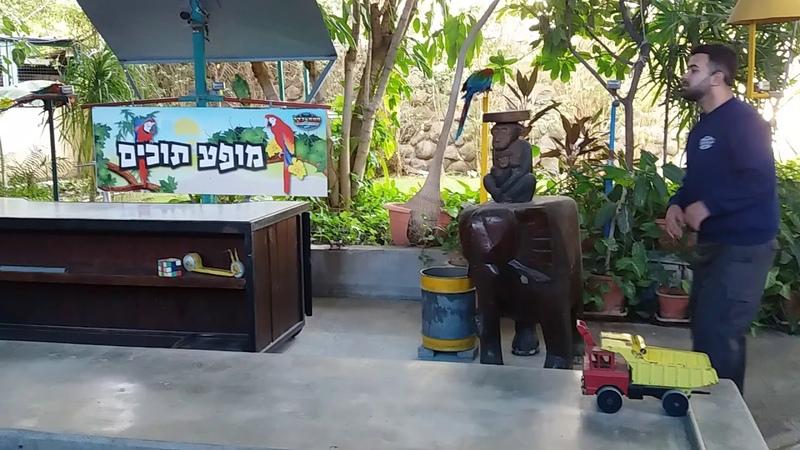 Забавный попугай из шоу в Хамат Гадер