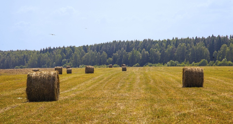 Засуха – не помеха. Агрохолдинг кинокомпании «Союз Маринс Групп» продолжает заготовку кормов в полном объеме.