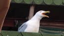 Disturbed - Down with the Seagullness MEME