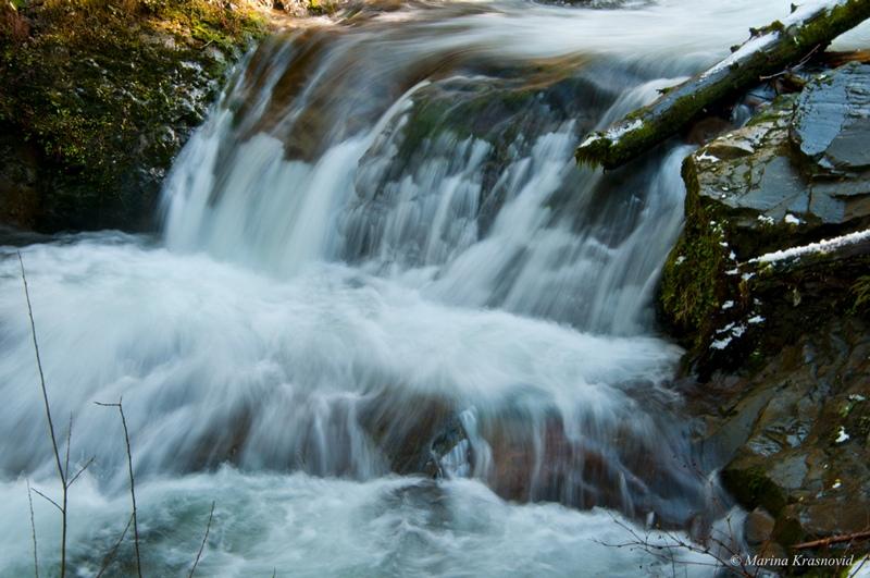 США, штат Вашингтон:  Hoh and Quinault Rainforests