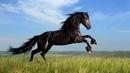 Картинка лошадь Лошадь трава прыжок